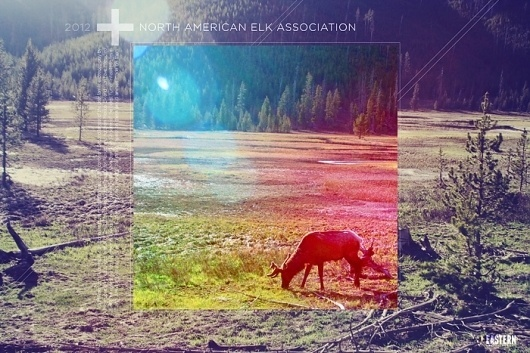 Eastern Design Bureau #elk #photo #naea #yellowstone