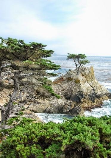 California : Matt Travaille : Graphic Design | Minneapolis #ocean #clouds #oak #tree #pebble #travaille #pacific #beach #california #coast