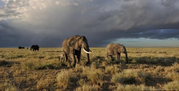 Photographer Gregoire Bouguereau #nature #wildlife #photography #animals