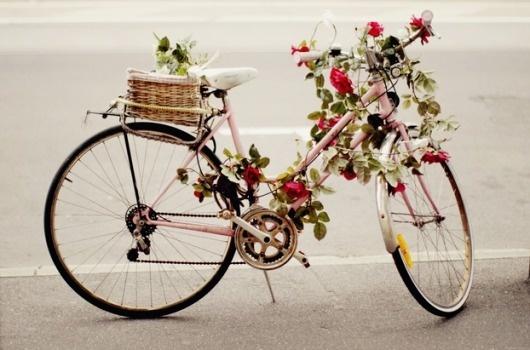 The cherry blossom girl (2) #plants #girl #blossom #cherry #photography #bike #flowers