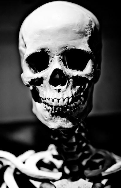 Coloraxia #skull