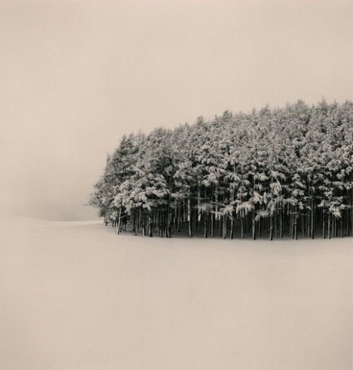 photography / /// #forest #photography #snow