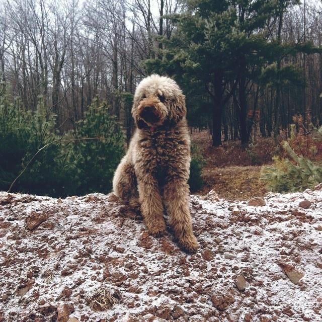 #dog #Instagram