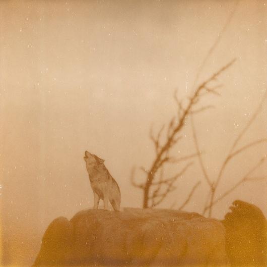 A9.jpg 670×669 píxeles #iglesias #wolves #polaroid #landscape #photography #assaf