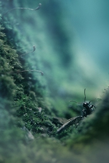 the ant thriller on the Behance Network #photography #ant