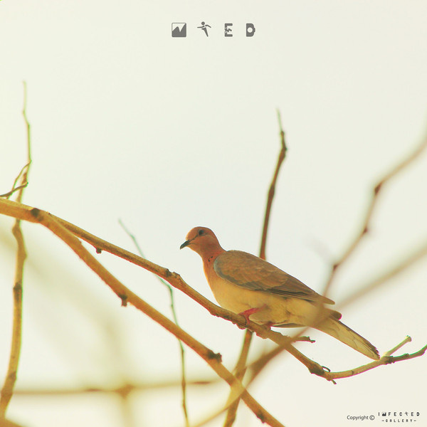 Searching Home #gallery #tree #infected #hekhardesign #bird #alone