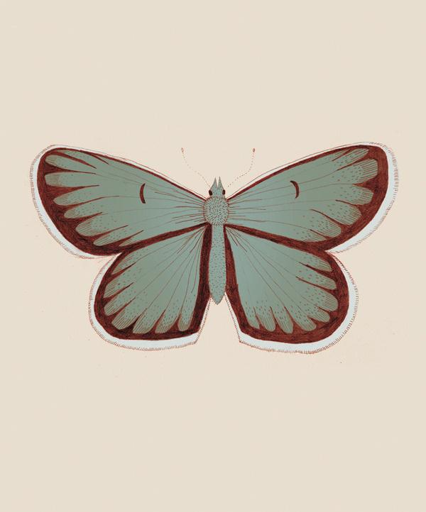 Butterfly days mariadiamantes #butterflies #illustration #design