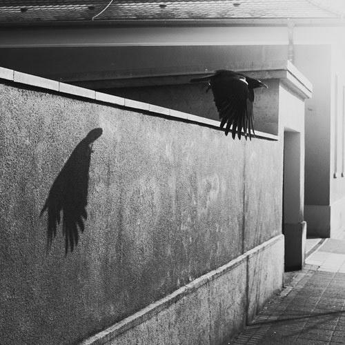 Photographer Martin Gommel #gommel #martin #photographer