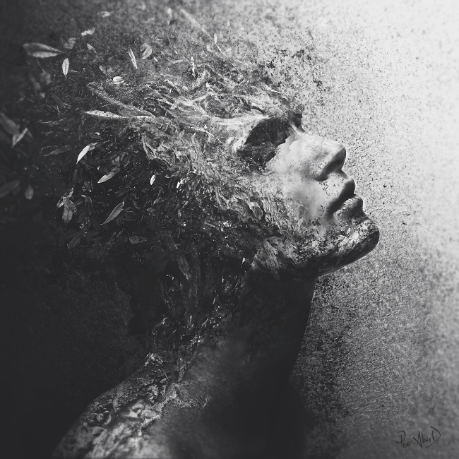 """Attrition"" by Pierre-Alain D. #white #attrition #black #texture #wood #portrait #nature #surreal #dark #leaves"