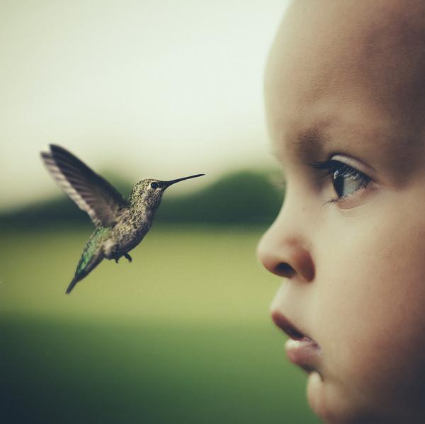 Ordinary Fox - Conor Keller Photography #flight #hummingbird #child #bird #photography #wings #beauty