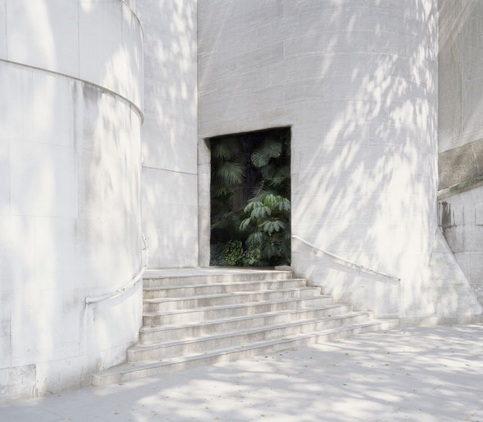 Photomonitor - Interviews - Haven Her Body Was #foliage #white #photography #shadow #art #exterior #light #plant