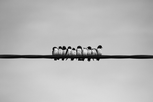 All sizes | 113. Ten Little Birds | Flickr - Photo Sharing! #photography