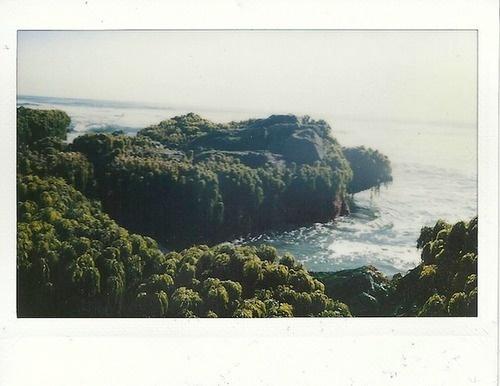 Likes | Tumblr #waves #sea #trees #coast
