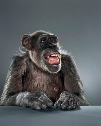 Screen-shot-2011-02-03-at-09.50.36.png 626×777 pixels #photography #monkey