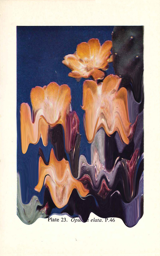 Plate 23. Opuntia Elata #print #cacti #tanimura #hana #succulents #paint #melting #flower #cactus #plant