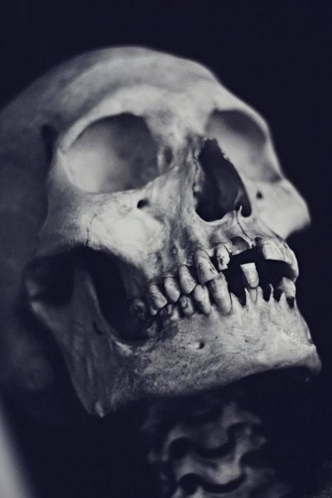 Skull via Red Medusa #skeleton #white #black #photography #and #dead #skull #bones
