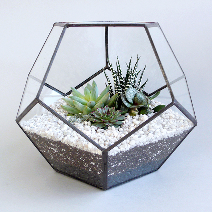 Best Tiny Geometric Cactus Spring Summer Images On Designspiration