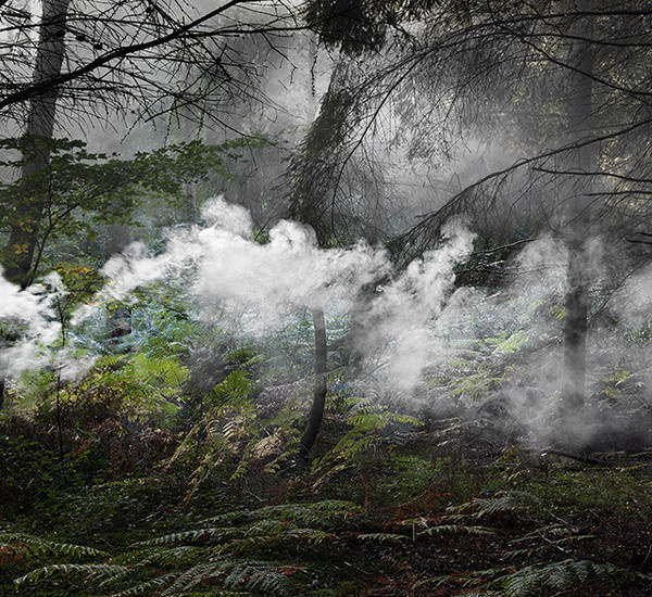 Forest Photography by Ellie Davies #inspiration #photography #nature