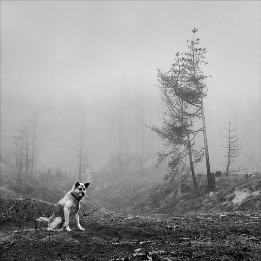 ...dead woodland...: Photo by Photographer Milena Galchina - photo.net #photography #white #black #and