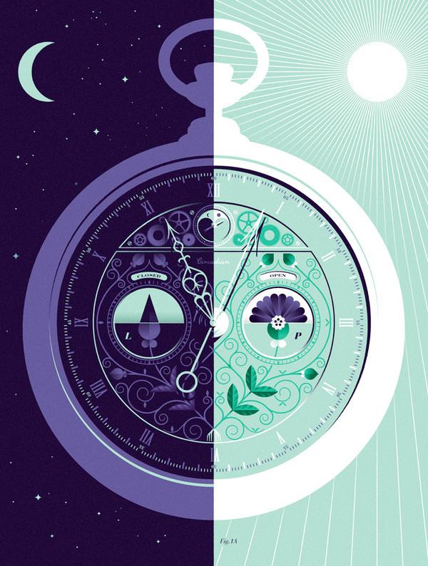 The Circadian Clock #illustration #color