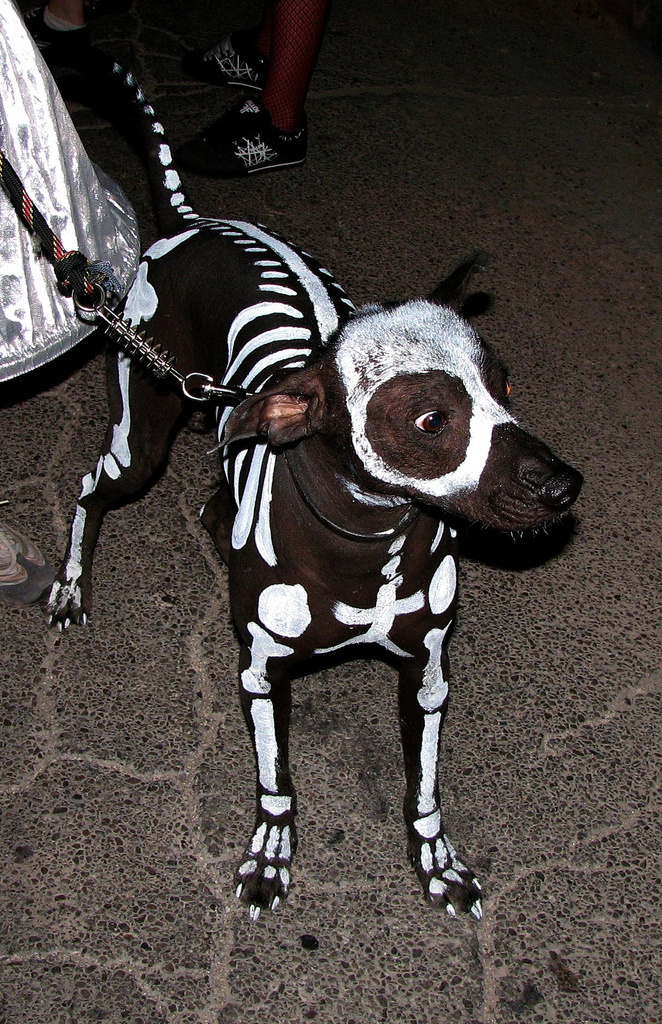 Yay Hooray   Best use of Live Journal (Official) #skeleton #dog