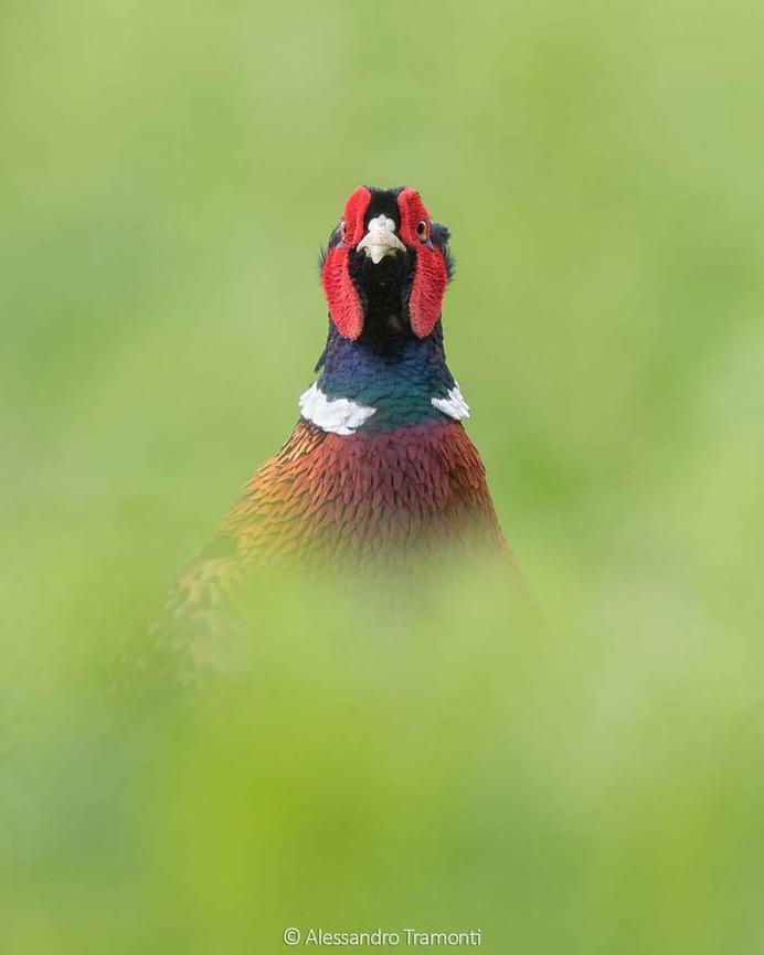 #birdwatching: Wonderful Bird Photography by Alessandro Tramonti