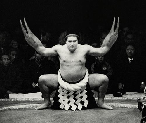 Crab Walk, Sumo Style #sumo #crab #crabwalk #claw #black and white