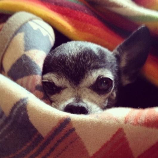 Google Reader (245) #photography #dog