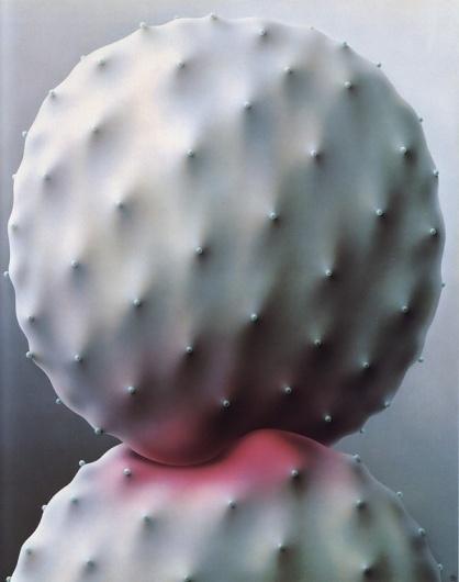 Aimei Ozaki | The New Black #scale #interaction #cactus #grey
