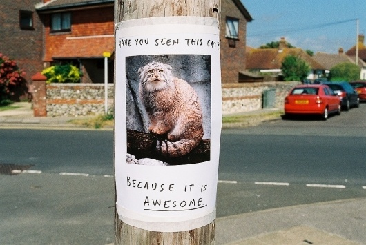 All sizes   Have You Seen This Cat?   Flickr - Photo Sharing! #cat #awesome