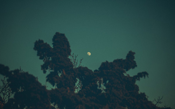 Goodbye Supermoon #sweden #super #gteborg #landscape #night #gothenburg #trees #moon