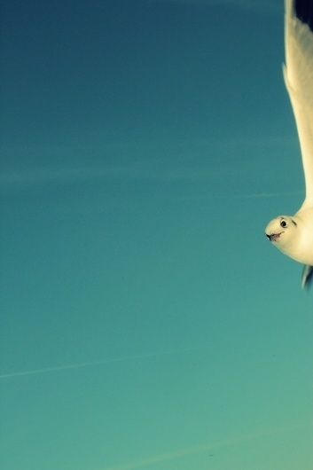 websitesarelovely #photography #retro #snapshot #seagull
