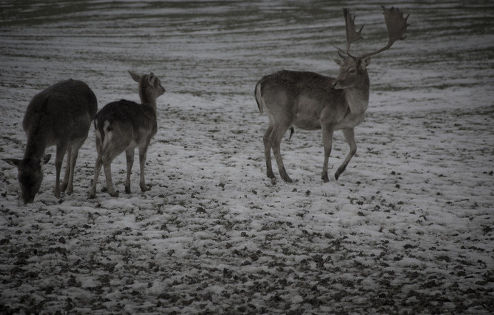 K A M I L A N O R A N E T I K #wild #deer #wilderness #landscape #photography #natural #animals #winter