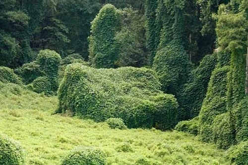 Subtopia: The Green Yonder #landscapes #green
