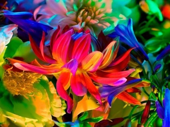 Torkil Gudnason #color #floral #flowers