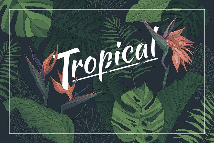 Tropical Set: Patterns & Elements