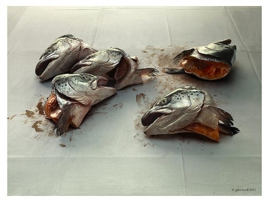 Collate #photo #fish