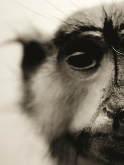 Animals on Photography Served #photography #monkey