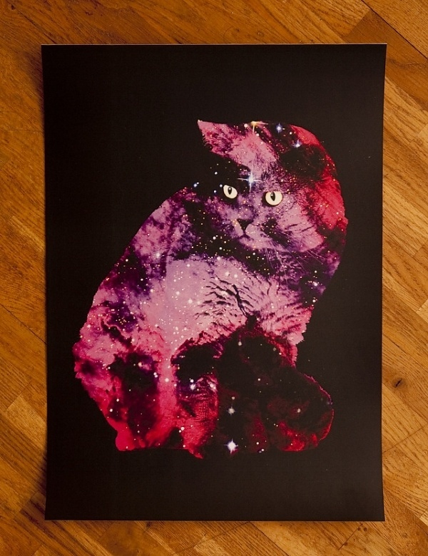 Archive illustration   Feather and Webb #zippora #cat #poster #art #lux #celestial