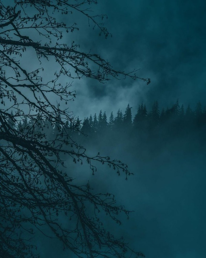 Breathtaking Moody and Mysterious Forest Photography by Dylan Furst
