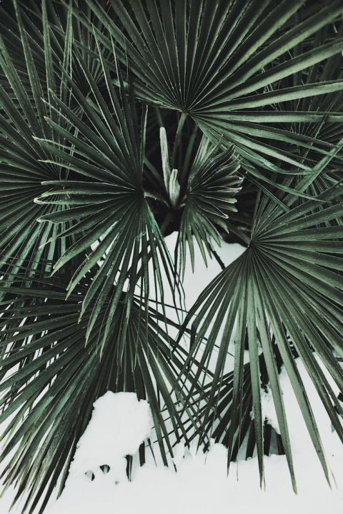 Margaux Roy | PICDIT