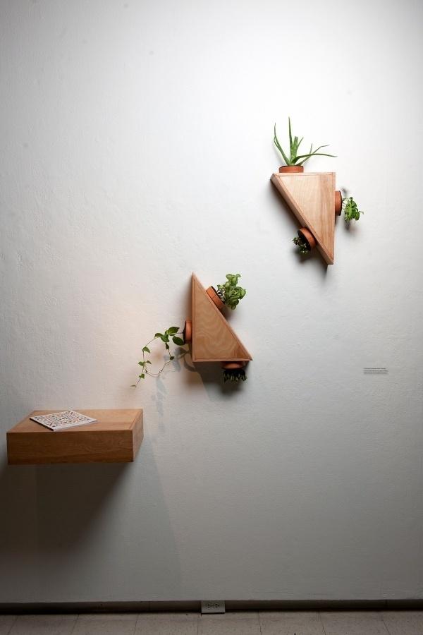Indoor Plant Module #plants