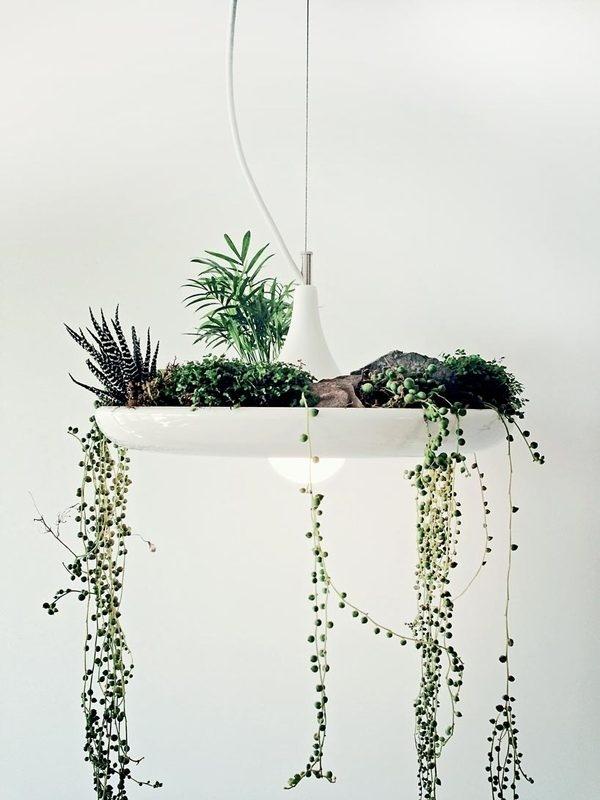 babylonlightfixture.jpg (818×1091) #light #plants #hanging #succulents