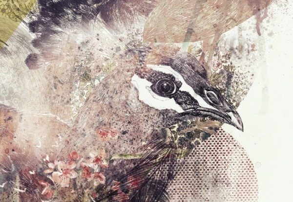 The bird project on Behance #birds #illustration #poster #realistic #collage