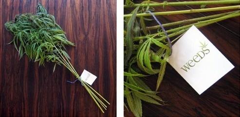 advertising | urban taster | Page 3 #weeds #6 #season