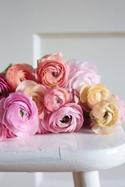 (9) Likes | Tumblr #pink #floral #flower #roses