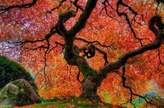 Nature Photography by David Gn » Creative Photography Blog #inspiration #photography #nature