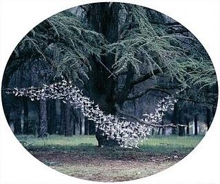 lola guerrera: DELIGHT IN MY GARDEN (WORK IN PROGRESS) #birds #paper #art #dlight