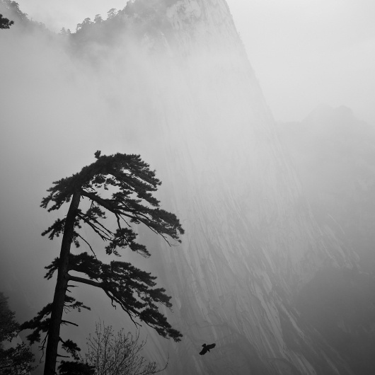 All sizes | Hua Shan 1 | Flickr - Photo Sharing! #foggy #julian #mountain #fog #tree #tan #asia #misty #mist #china