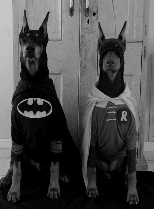 Tumblr #robin #suoperhero #dogs #batman